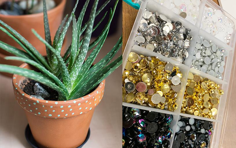 Grow your Own Aloe Plant