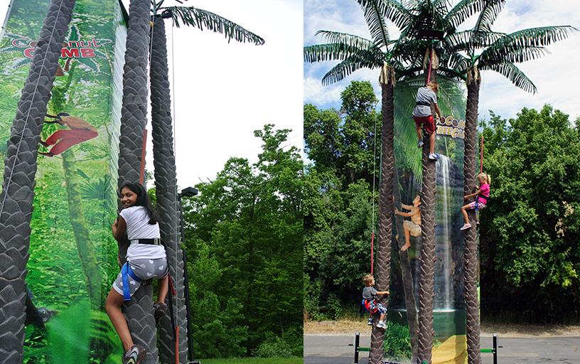 Coconut Tree Climb