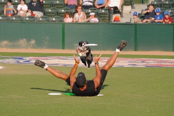 High Flying Frisbee Dogs